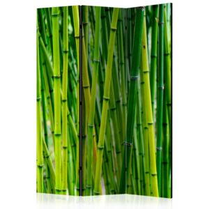 Paravento - Bamboo Forest [Room Dividers]