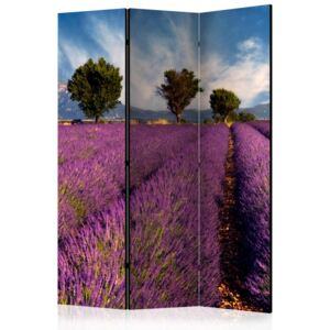 Paravento - Lavender field in Provence, France [Room Dividers]