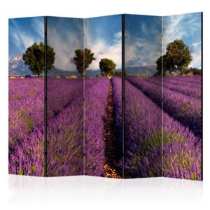 Paravento - Lavender field in Provence, France II [Room Dividers]