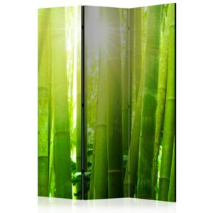 Paravento - Sun and bamboo [Room Dividers]